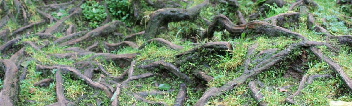 Foto van boomwortels van een eik langs een beek die kris kras aan de oppervlakte liggen. Hoeksche Waard, Rotterdam, Dordrecht, Oud-Beijerland. Mijnsheerenland, Westmaas, Klaaswaal, Heinenoord, Maasdam, Puttershoek, 's-Gravendeel, Strijen, Numansdorp, Zuid-Beijerland, Nieuw-Beijerland, Barendrecht, Spijkenisse, Hoogvliet, Vlaardingen, Schiedam, Charlois, Kralingen - Crooswijk, Prins Alexander, Overschie, Nieuwerkerk aan de IJsel, Capelle aan de IJsel, Krimpen aan de IJssel, Krimpen aan de Lek, Ridderkerk, Zweindrecht, Willemstad, Goeree-Oost, Massage, Intuïtieve Massage, Klassieke Massage, Zwangerschapsmassage, Bedrijfsmassage, Stoelmassage, Bindweefsel, Spieren, Bindweefselmassage, Deep Tissue Massage, Reiki, Massagepraktijk, Esbima, Trans Esbimatraject, Kort Esbimatraject, Holistisch, Betrokken, Ontspanning, Chronische klachten, Spierpijn, Lichte-Depressie, Nieuwe balans, Burn-out, Stress, Migraine, RSI, Frozen Schoulder, Ontspanning, Bewustwording, Persoonlijke groei, Minder Klachten, Zetje in de rug, Ondersteuning, Neemt de tijd, Integer, Open houding, Vriendelijk, Eerlijk, Vertrouwd.